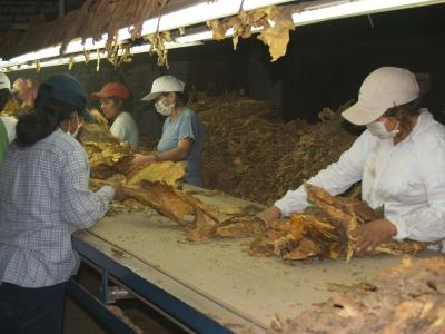 1 de junio: Día del empleado del tabaco